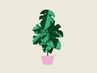 Plant Sit Monstera