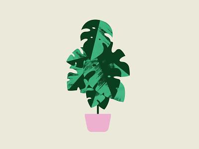 Plant Sit Monstera monstera plant leaves vector illustrator geometric flat illustration design
