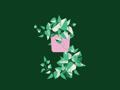 Plant Sit Pothos