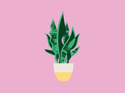 Plant Sit Snake Plant snake plant plant leaves vector illustrator flat geometric illustration design