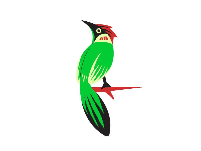 Woodpecker colourful bird red green brush paint illustrator illustration design