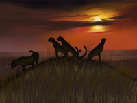 Wild life sunset... procreate illustration....