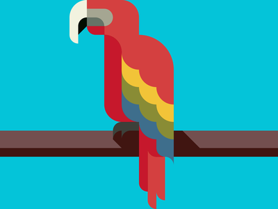 Parrot  -with a Drawing app-