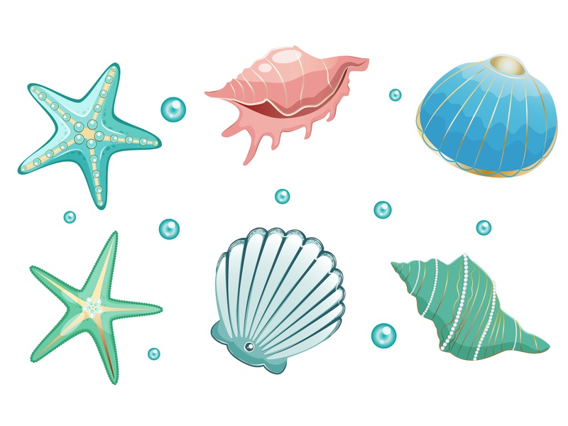 Sea shells collection sand marine beach underwater summer vector shells sea