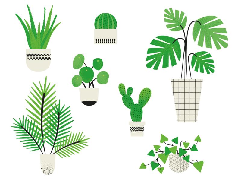 Houseplant Illustrations plants houseplants vector colour illustration graphic design design