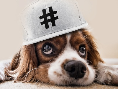 King Charles Spaniel for @iTrendCasual on IG