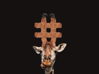 Giraffe for @iTrendCasual on IG