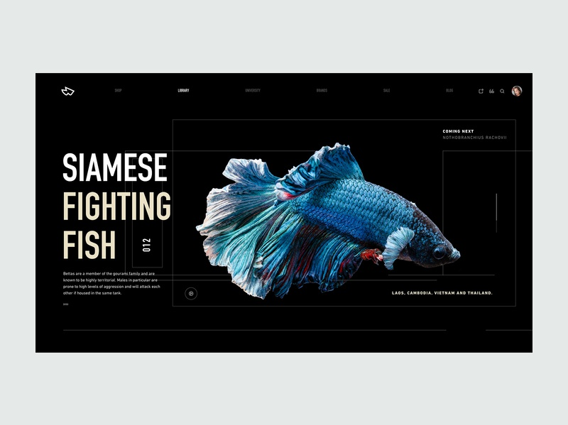 ZX Explorations - Header UI Concept ui ux clean responsive minimal landing typography design marketing website header interface web design simple fresh product pallete page profile data