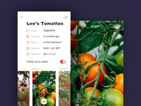 Lee's Tomattos