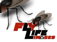 FlyLlife