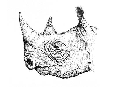 Rhino sketch illustrator design illustration artwork illustraion drawing art