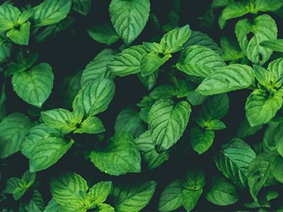 Basil plant app plantspot plantspot apple app store