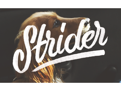 Strider type typography dog puppy strider marker copic handlettered handdrawn lettering