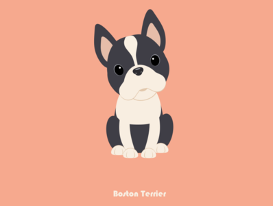 100 Days of Vector - Boston Terrier