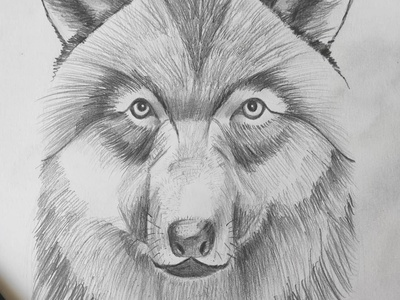 wolf wolf pencils sketch