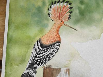 Watercolor watercolor bird illustration