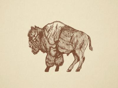 Buffalo Engraving paper buffalo sketch engraving