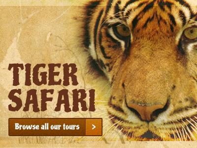 Wildlife Trails tiger safari wildlife
