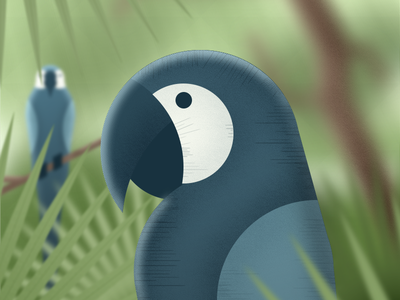 Creation: Day 5 geometric illustration jungle forest parrots birds