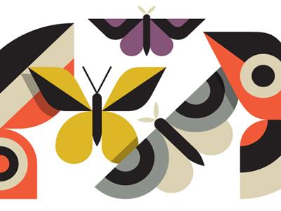 Butterflies butterfly moth