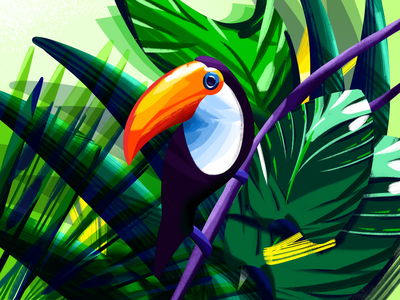 Toucan tropical nature forest colorful bright toucan art procreate illustration