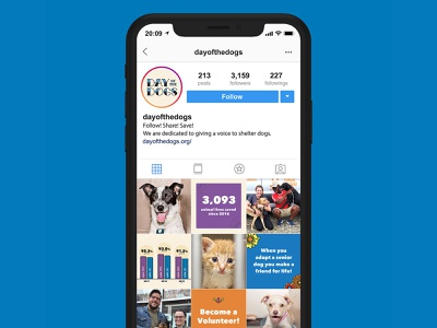 Day of The Dogs outreach tools marketing collateral website visual identity