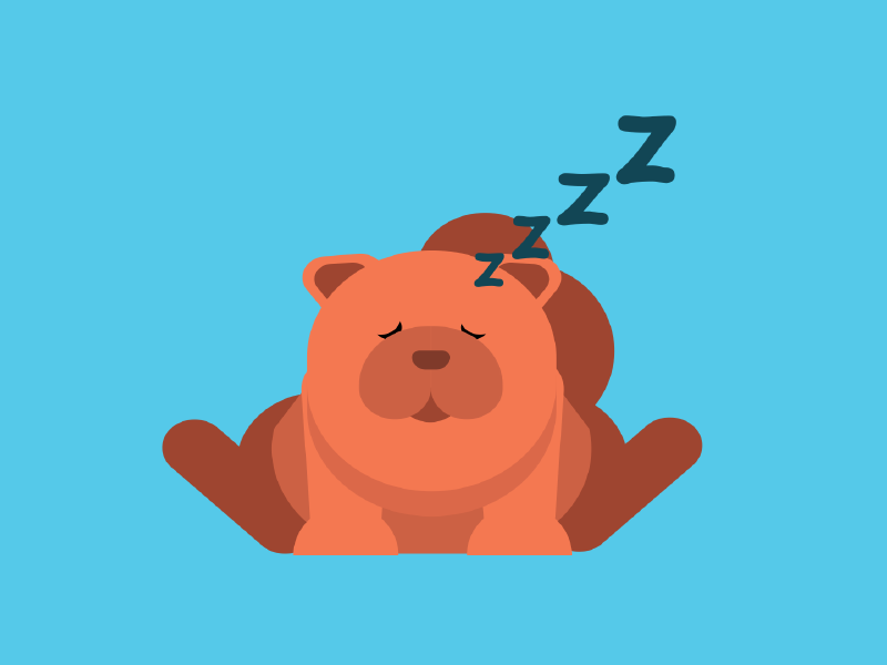 Sleepy Chow Chow instagram after effects puppy illustrator illustration flat flat design dog design cute chow chow animal