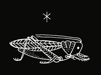 Cricket by Emily Small cricket logo pdx oregon portland illustrate drawing american traditional tattoo design tattoo art tattoo cricket hand drawn illustrator illustration