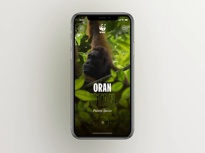 WWF Mobile Concept card cards ui motion interface animation cards webdesign clean app ux ui concept mobile map animals animal