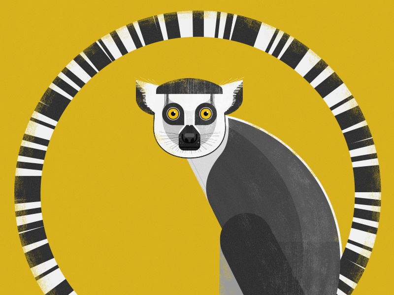 Ring Tailed Lemur vector lemur animals nature wildlife pets zoo illustration design graphics retro geometric