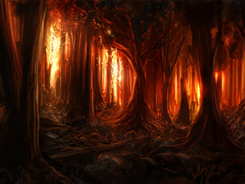 Burning Woods forest fire aflame night trees burning burn flames forest fire