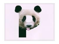 P /// Panda