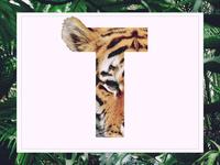 T /// Tiger