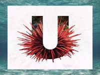 U /// Urchin