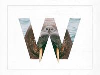 W /// Walrus