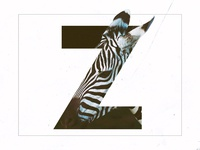 Z /// Zebra