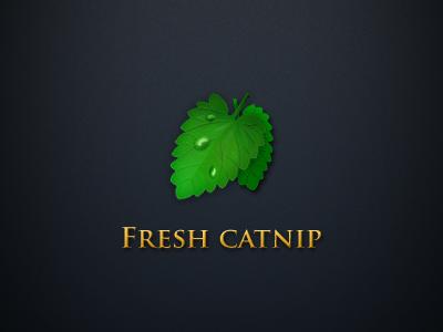 Nothing quite like fresh catnip!
