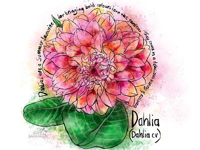 Dahlia inktober2020 procreate watercolor flower floral art dahlia