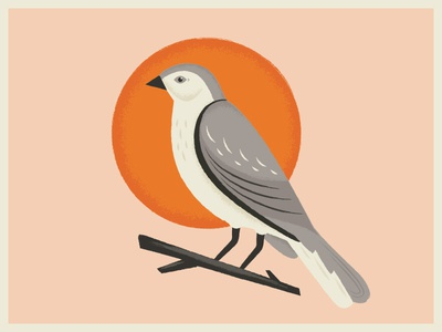 Mockingbird texture illustration retro vintage sun bird