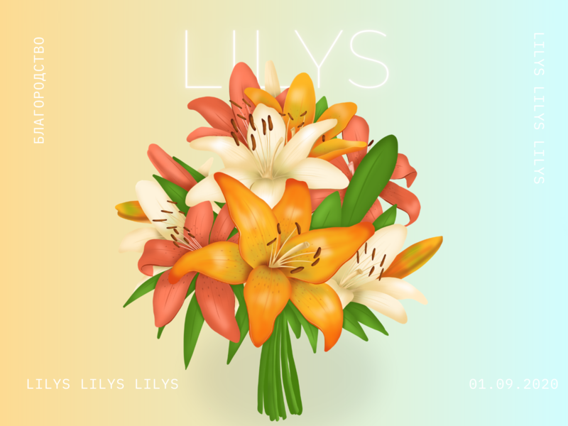 Lilys art illustration flower lilys