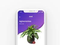 Plant Care - Your Plants