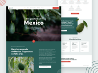 Homepage for avocados importer