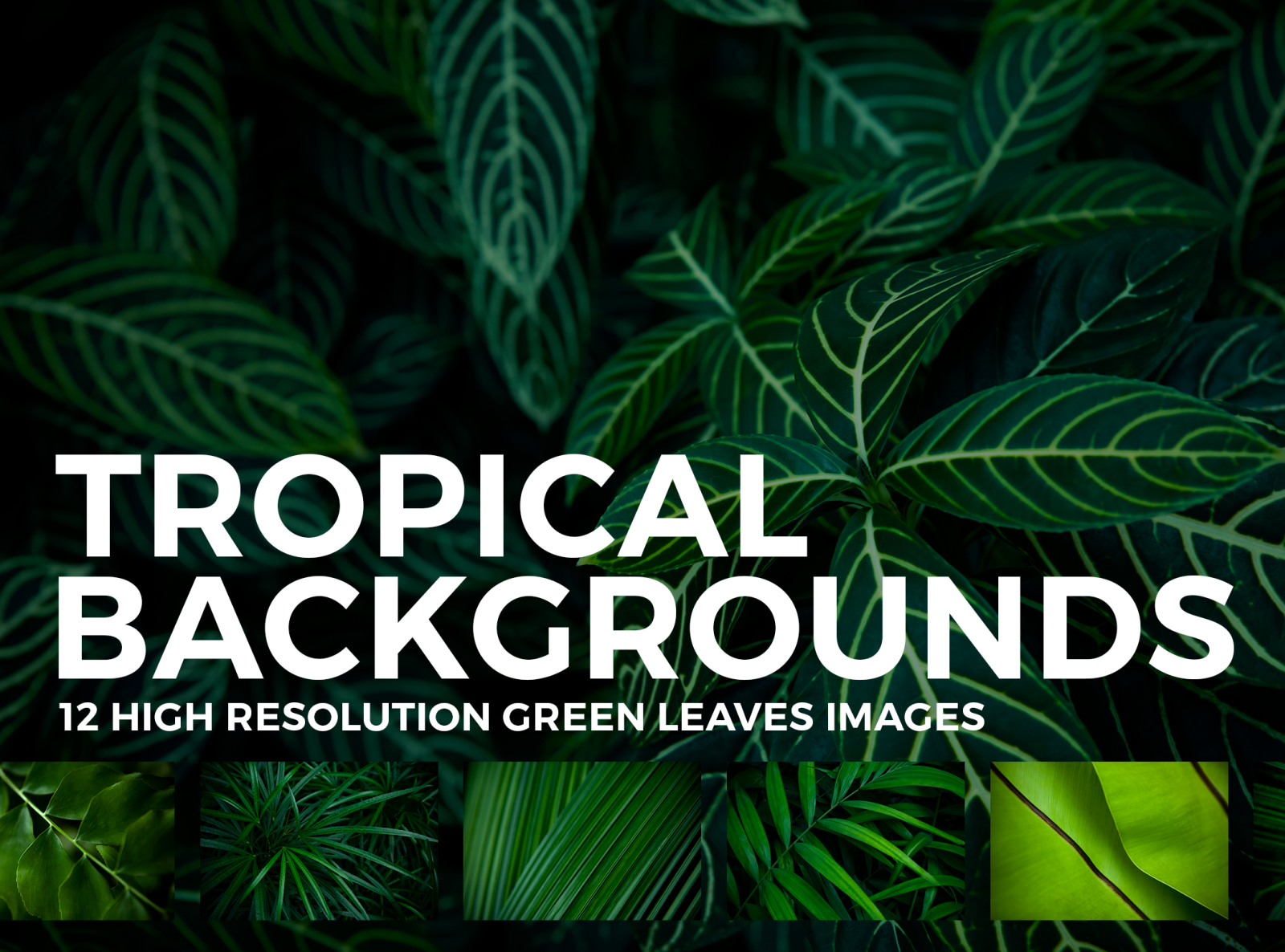 12 Tropical Leaves Backgrounds By Mint Pixels On Dribbble Tropical leaves stock photos and images. 12 tropical leaves backgrounds by mint