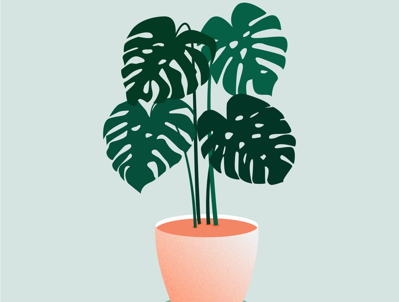 Illustration Flower Pot. Pr.1.