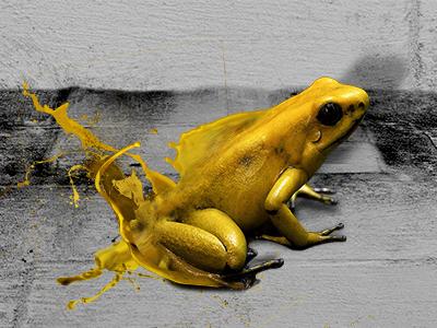 Poison Frog cd cd cover frog poison music