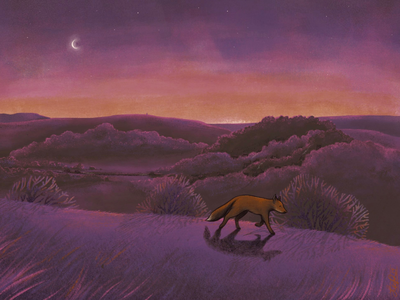 Fox on the hill