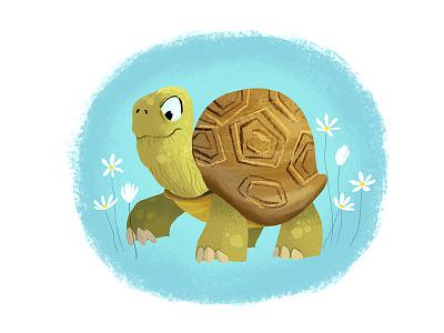Turtle illustrations children