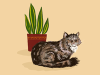 Sam the cat hand drawn art 2d plant cute cat procreate illustration