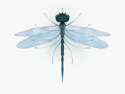 Surreal Dragonfly III symmetry digitalart freelance illustrator personal project dragonfly surreal procreate imagination fantasy insect nature illustration