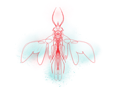 Red and aqua insect playful concept art creature aqua red lineart freelance illustrator personal project surreal procreate digitalart symmetry imagination fantasy insect nature illustration